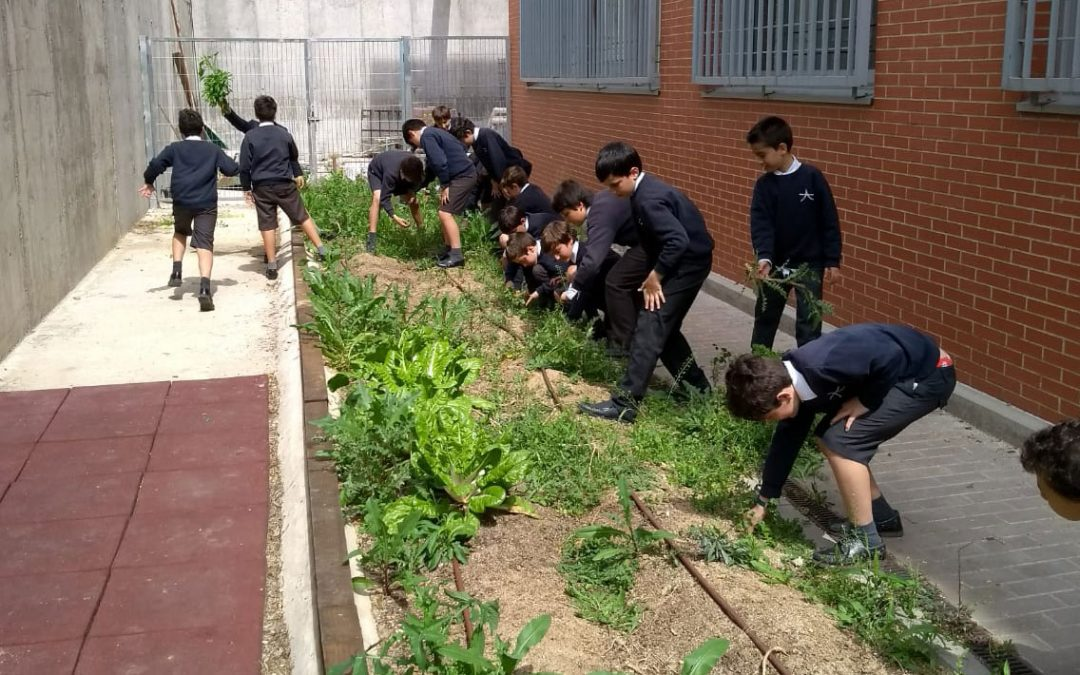 Más allá del aula: el huerto escolar